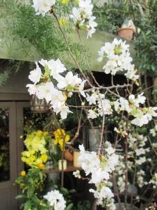 年度末に向けて、花開く?!_d0091909_12205229.jpg