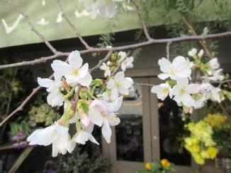 年度末に向けて、花開く?!_d0091909_1221121.jpg