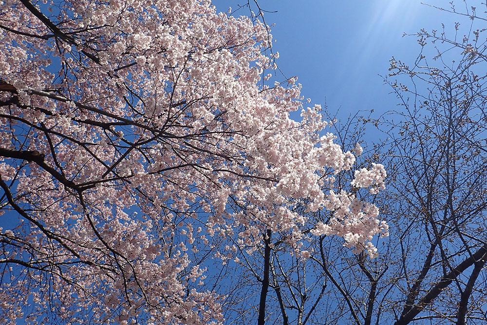 会社近くの花壇 ヒメハナバチ-2_f0324026_2065635.jpg