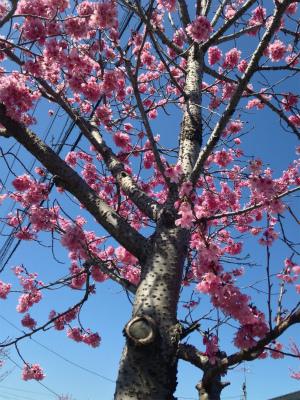 ✩桜・さくら・SAKURA✩_a0253729_1241998.jpg
