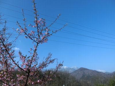 北杜(周辺)で一番早い桜?_f0019247_23703.jpg