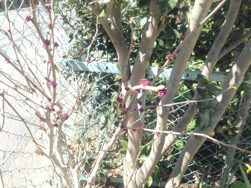 3月24日の庭。春だね_e0026053_11192442.jpg