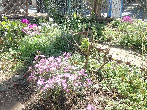 3月24日の庭。春だね_e0026053_1119348.jpg