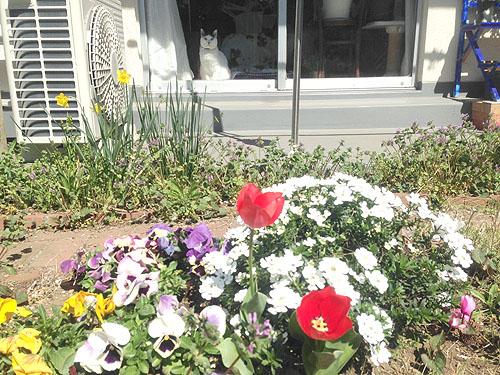 3月24日の庭。春だね_e0026053_11193884.jpg