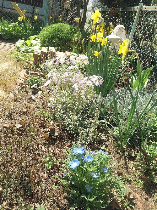 3月24日の庭。春だね_e0026053_11212542.jpg