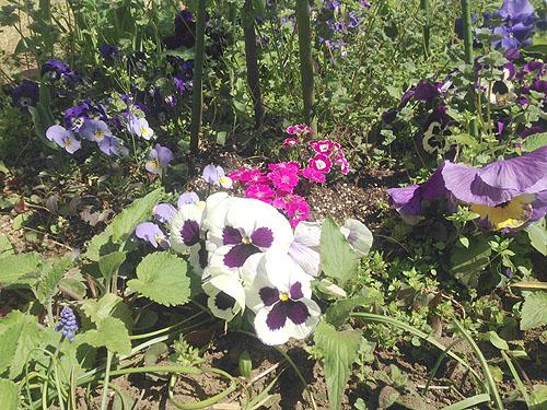 3月24日の庭。春だね_e0026053_11251078.jpg
