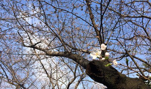 桜の季節~!!ワクワクの毎日~!_d0082356_09465631.jpg