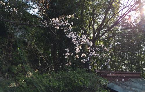 桜の季節~!!ワクワクの毎日~!_d0082356_09474944.jpg
