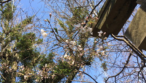 桜の季節~!!ワクワクの毎日~!_d0082356_09480518.jpg