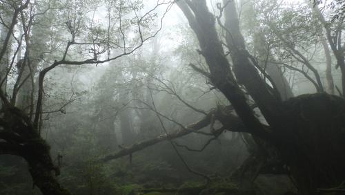 山の神様にご挨拶 ブロッケン現象_b0160957_1935213.jpg