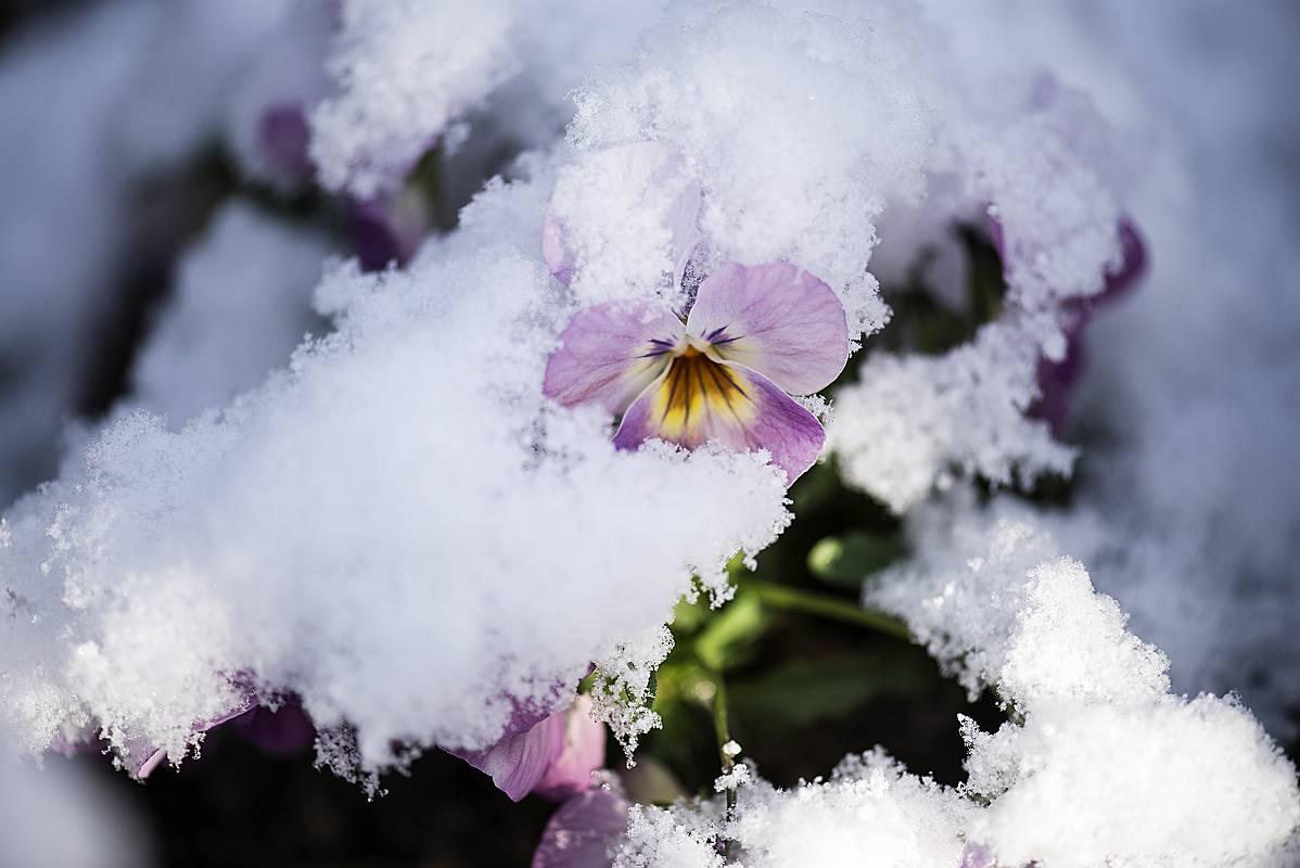 春雪_e0271864_7352559.jpg