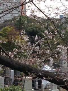 2015.3.24   花を求めて、お散歩_a0083571_12205158.jpg