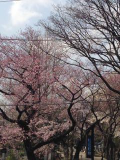 2015.3.24   花を求めて、お散歩_a0083571_12224916.jpg