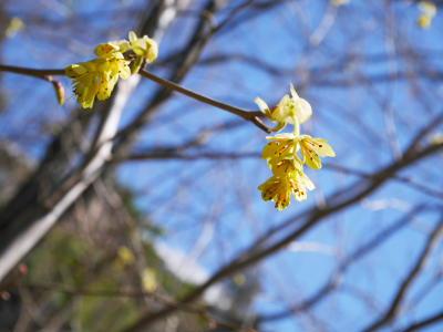 春ですね〜_a0027275_21213547.jpg