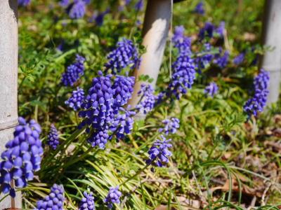 春ですね〜_a0027275_2121448.jpg