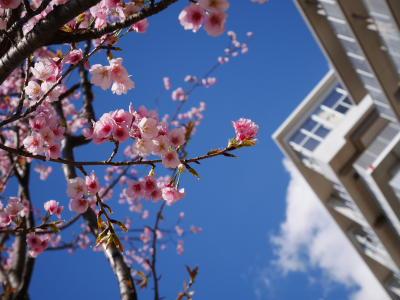 春ですね〜_a0027275_21215758.jpg