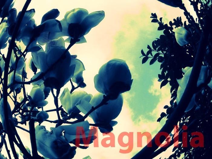 d0199578_10051802.jpg