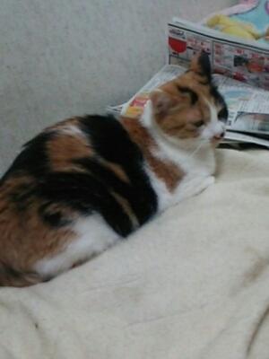 ポヨ_b0112380_2239538.jpg