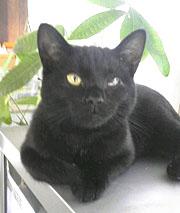 愛猫・クロくんの2回忌_b0114798_17515722.jpg