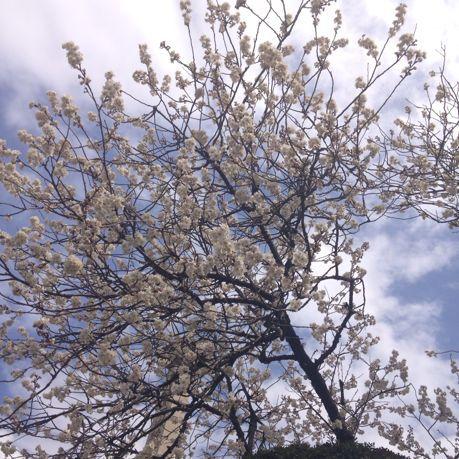 春_e0132713_22284578.jpg