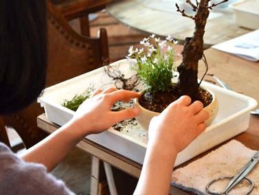 桜盆栽教室2回目ありがとうございました_d0263815_17213063.jpg