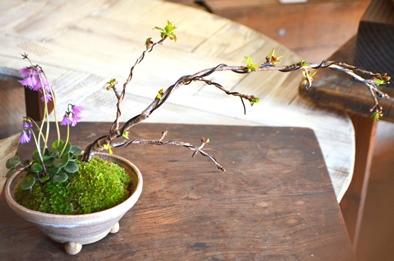 桜盆栽教室2回目ありがとうございました_d0263815_18272512.jpg