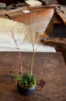 桜盆栽教室2回目ありがとうございました_d0263815_1839240.jpg