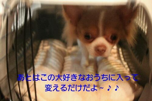 b0130018_2159402.jpg