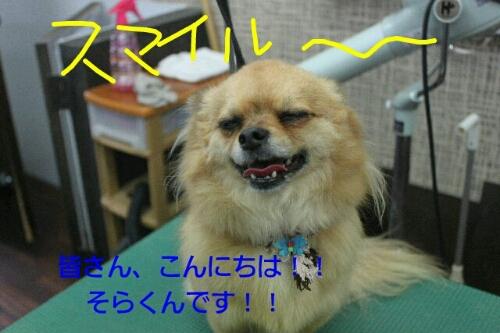 b0130018_22211896.jpg