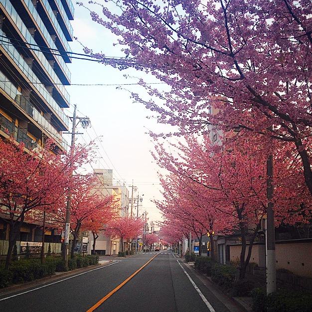 Daily Photo/2015_3_25_e0121640_13331287.jpg