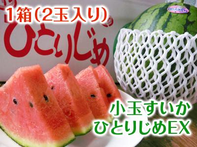夢スイカ 小玉スイカ「ひとりじめEX」 本日初出荷!!_a0254656_17244848.jpg