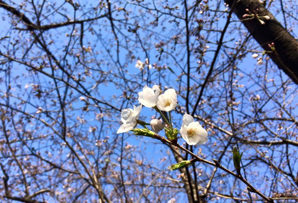 桜の季節~!!ワクワクの毎日~!_d0082356_10361116.jpg