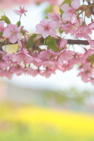 春を見に行って来ました。_f0185066_18371837.jpg