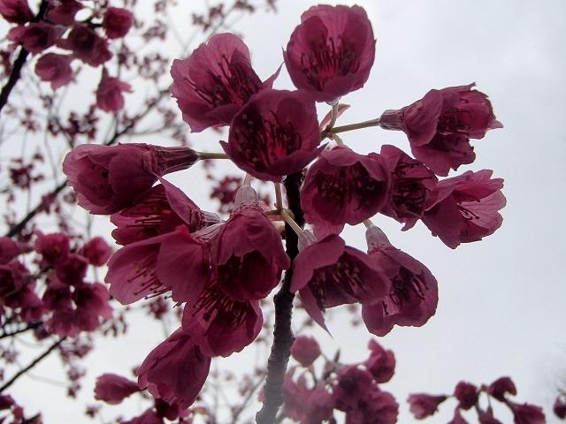 花々_d0105967_11360482.jpg