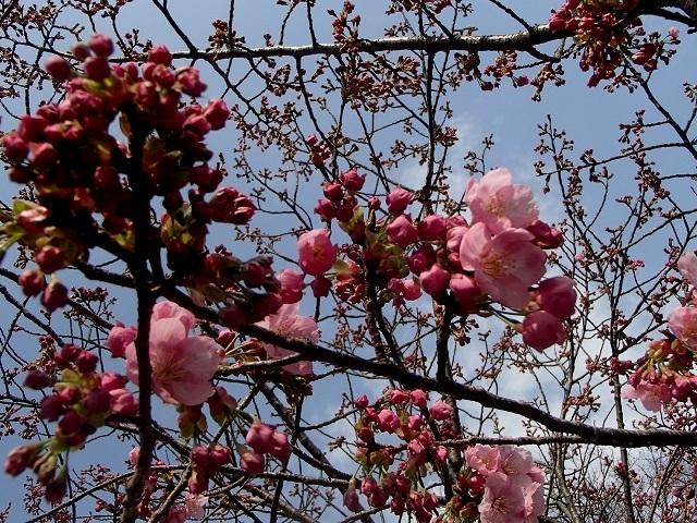 花々_d0105967_11373250.jpg