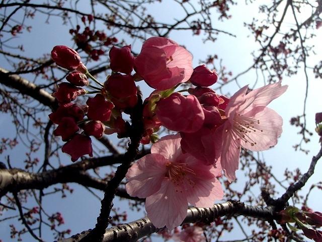 花々_d0105967_11374679.jpg