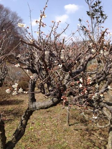 春が来てます‼︎_a0324471_16213083.jpg