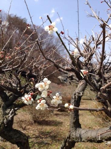 春が来てます‼︎_a0324471_16232955.jpg