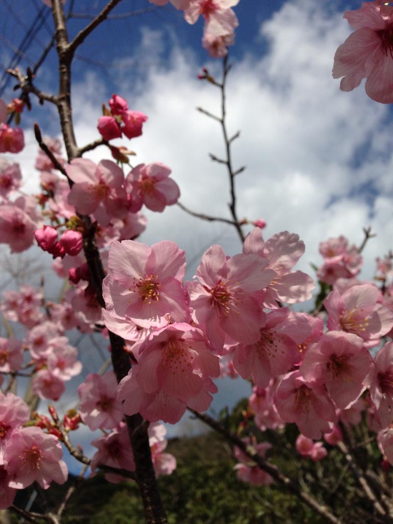 春の訪れ_b0067774_18543439.jpg
