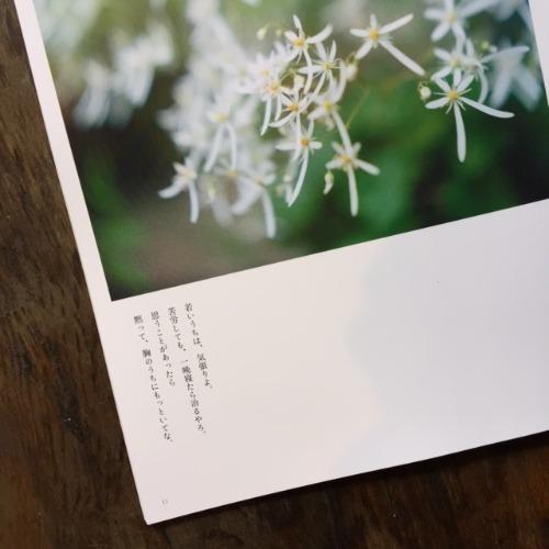 【ほんとうの春を待つための**章】その1_d0028589_1135464.jpg