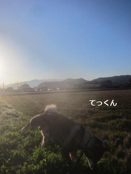 f0143123_20171375.jpg