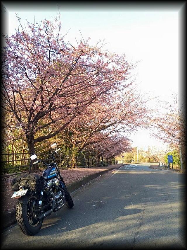 「 春ですね・・・ 」_b0133126_9425722.jpg