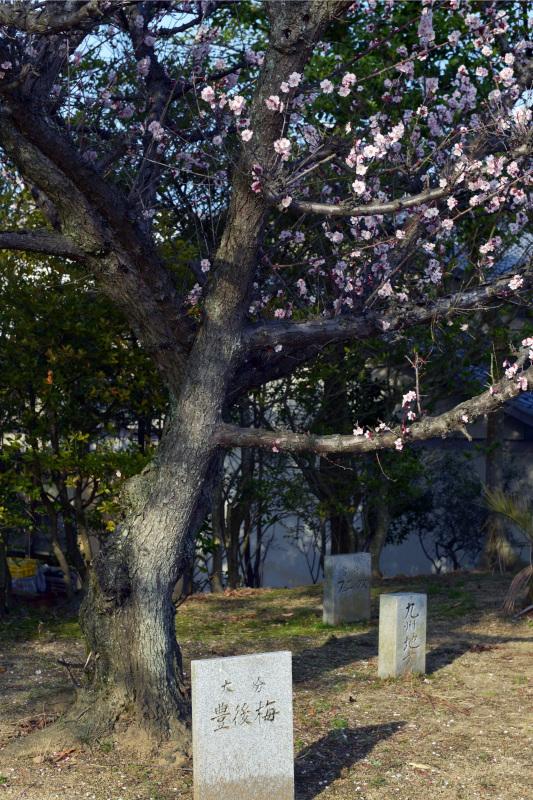 屋島フォトハイキング ⑤_d0246136_00172552.jpg