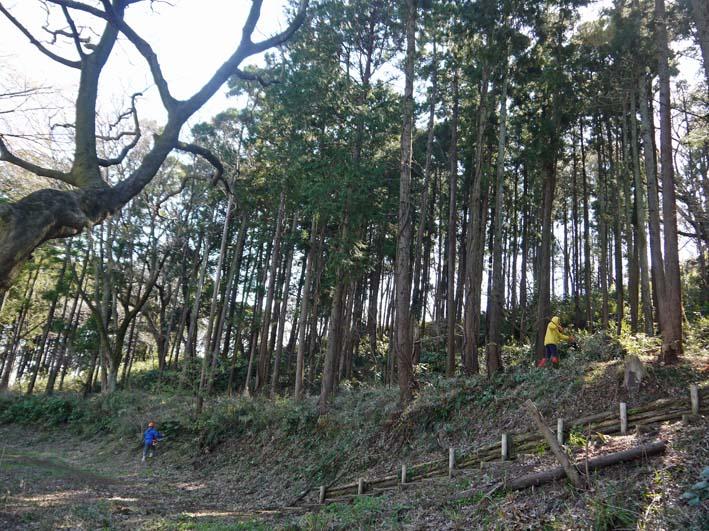 六国見山森林公園の夫婦桜五分咲き、今週末見頃か3・25_c0014967_1204681.jpg