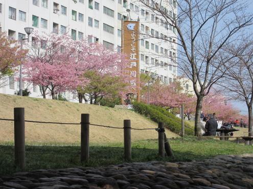 旧中川春便り_c0249569_13282957.jpg