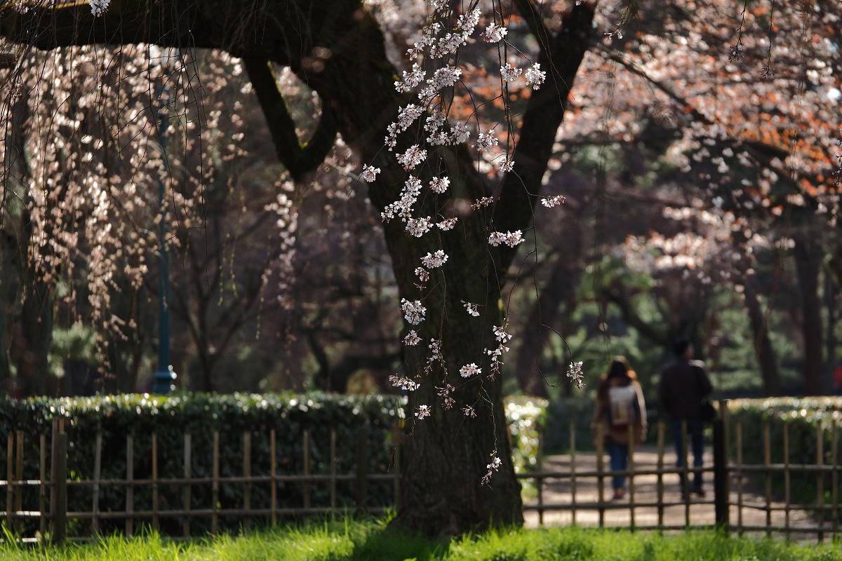桜 2015    <京都御所>                          _f0021869_0261248.jpg