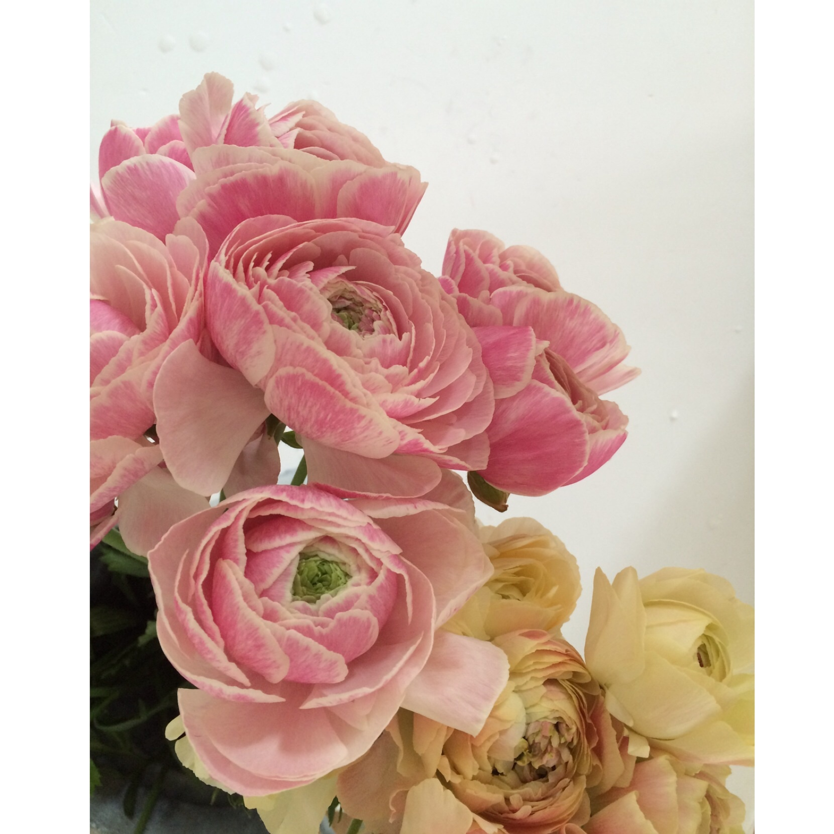 春のお花も入荷しました(^^)_c0325871_09094898.jpg