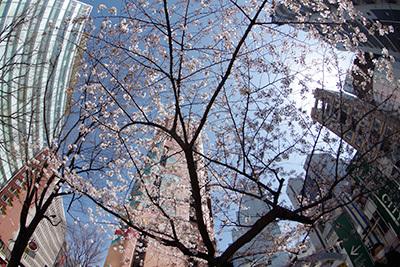 3月26日(木)の渋谷109前交差点_b0056983_12184910.jpg