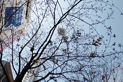 3月26日(木)の渋谷109前交差点_b0056983_12185094.jpg