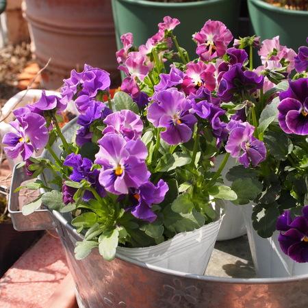 花卉市場の見本市_a0292194_19452195.jpg